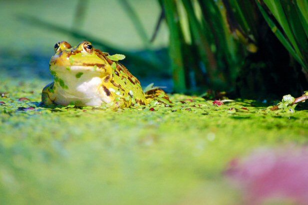 Frosch sitzt am Wasser