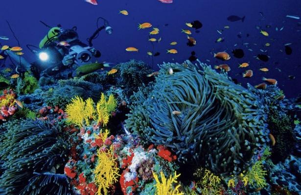 Die Unterwasservielfalt der Malediven ist überwältigend