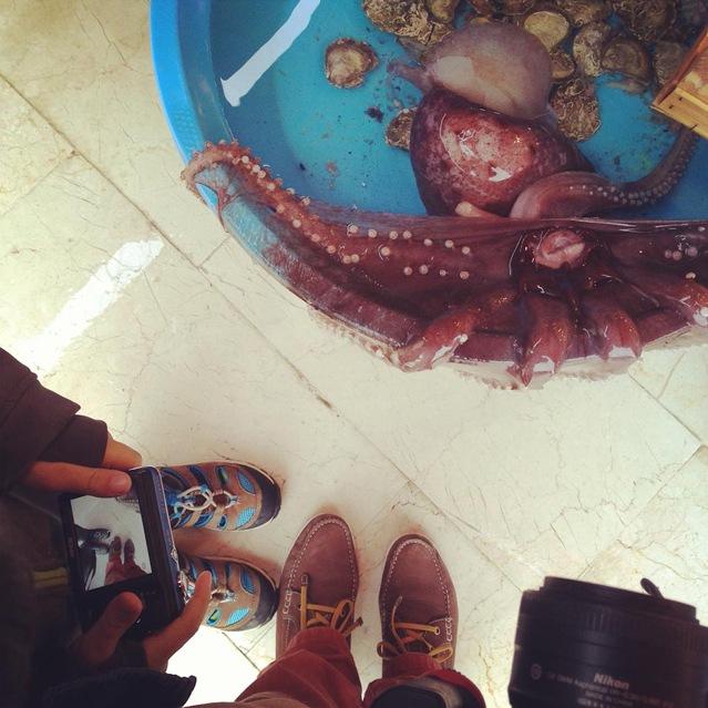 Mutter und Kind blicken auf einen Eimer in dem ein roter Octopus schwimmt