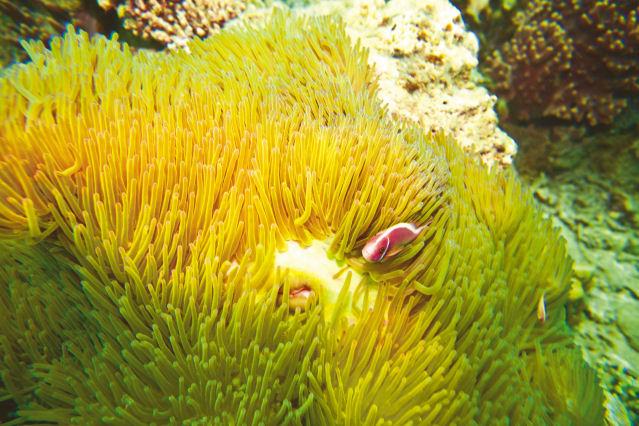 Rotes Meer Unterwasserwelt