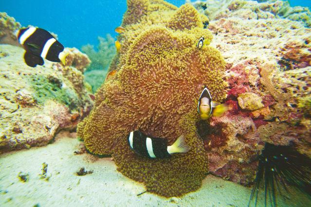 Bewohner des Roten Meeres