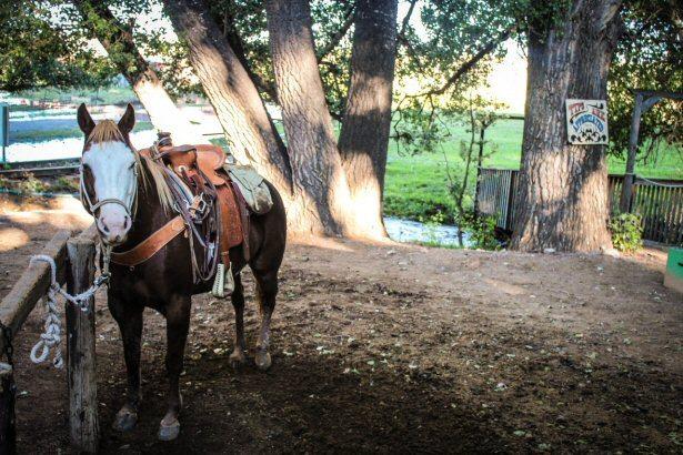 Pferd eines Cowboys in Wyoming