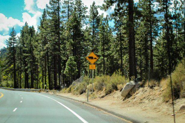 Verkehrsschild: Achtung Bären