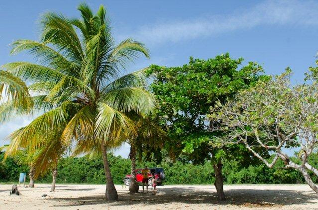 Unter einer Palme am Strand stehen ein Mann und ein Kind