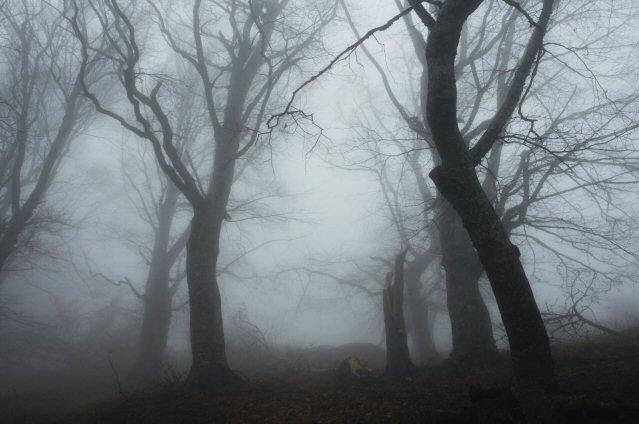 Nebliger Wald im Dunkeln