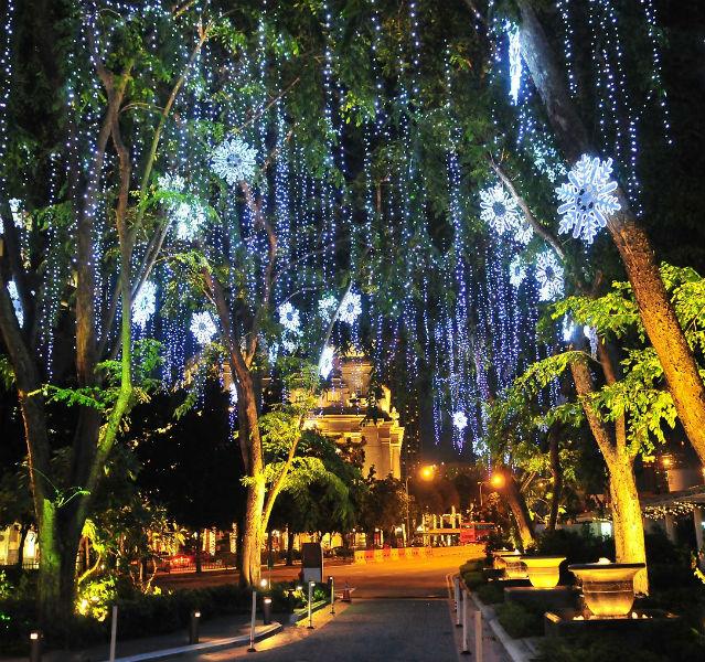 Bäume mit Beleuchtung