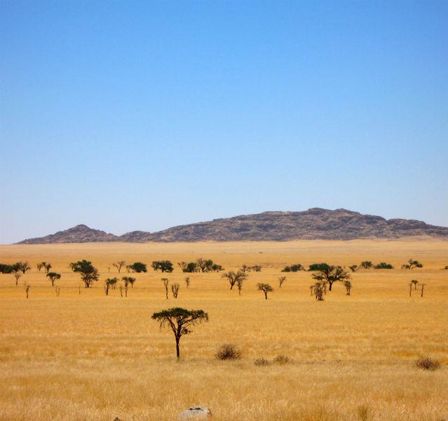 Wüste mit Hügel im Hintergrund und kleinen Schirmakazien