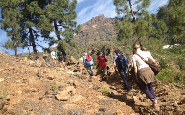 Wandergruppe auf Gran Canaria zwischen Kiefern und schroffen Felsen.