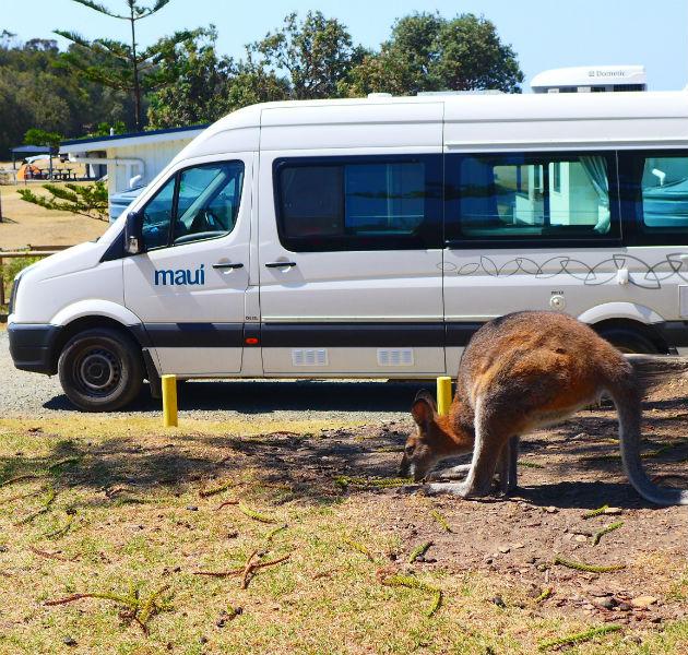 Känguru vor Camper
