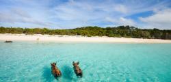 Da schwimmen sie, die süßen Rüsseltiere Fotos (2): TUI
