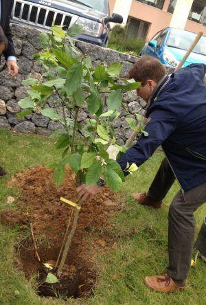 Ein Baum wird gepflanzt - Sensimar Grand Mediterraneo Resort Korfu