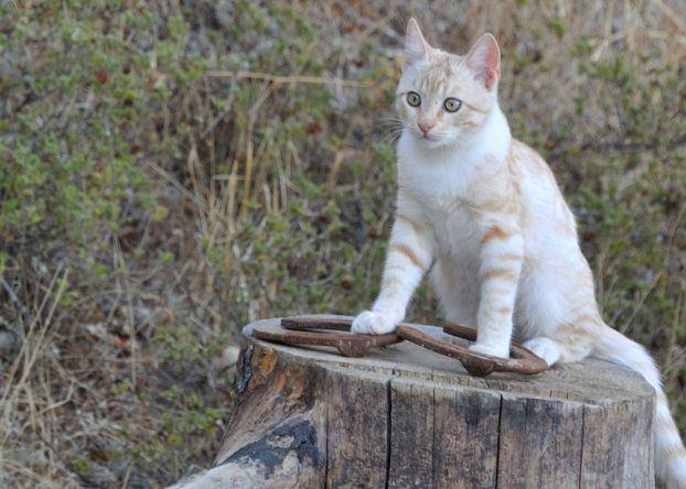 Katze Elpida Ranch Rhodos