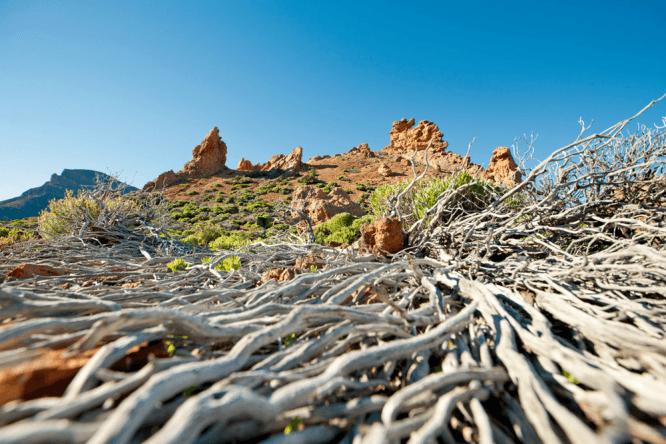 Unwirklich und wunderschön - die Landschaft Teneriffas hält reizvolle Motive bereit