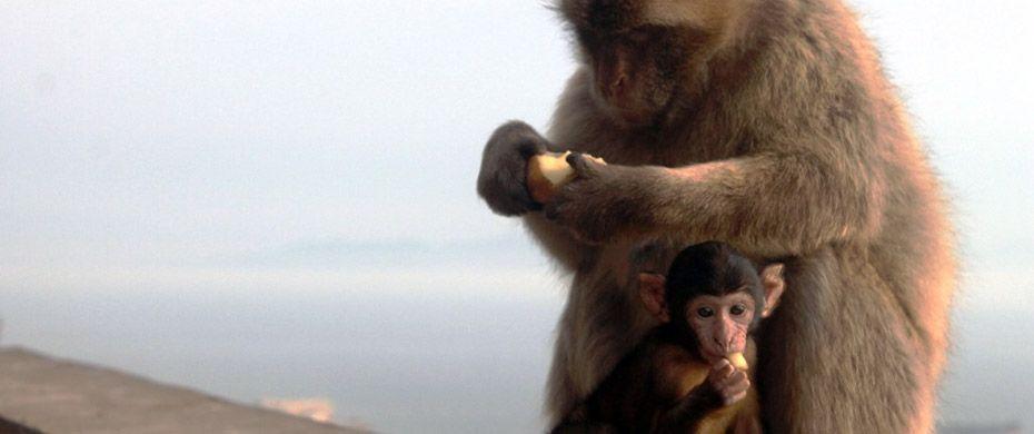 Gira Espana! Station 5: Gibraltar – Von Insel- und anderen Affen