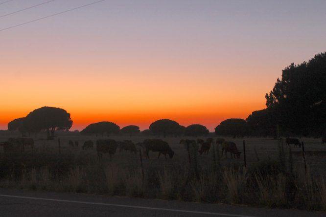 Sonnenuntergang an der Costa de la Luz