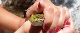 Frosch beim Canyoning