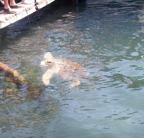 Die süße Riesenschildkröte Josie