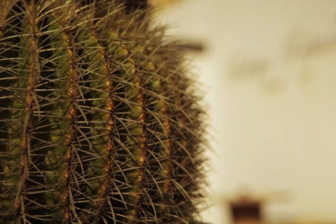 Kaktus Lanzarote