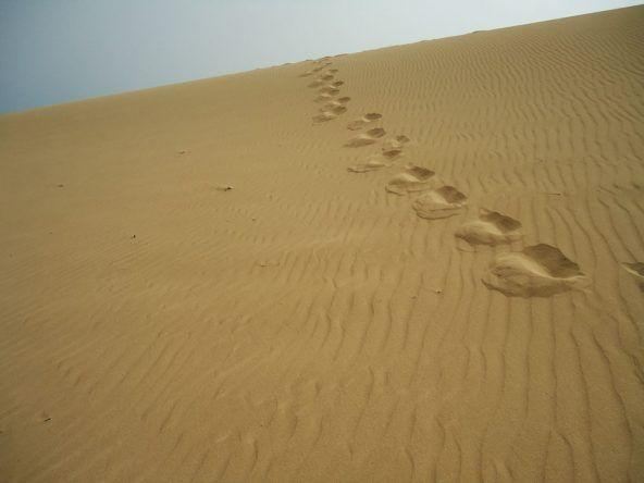 Düne Fuerteventura