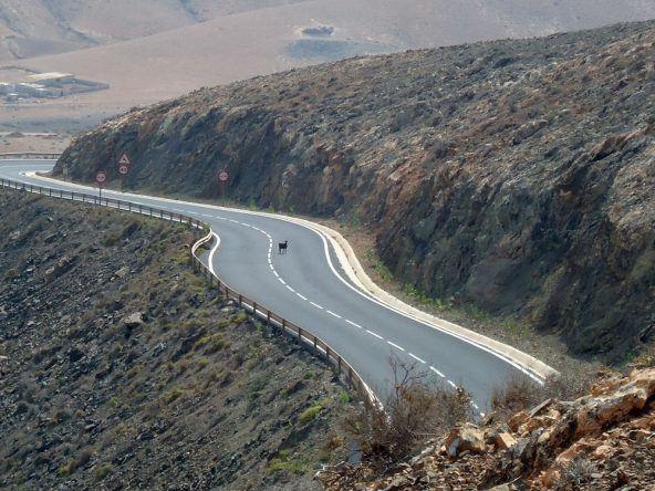 Ziege Straße Fuerteventura