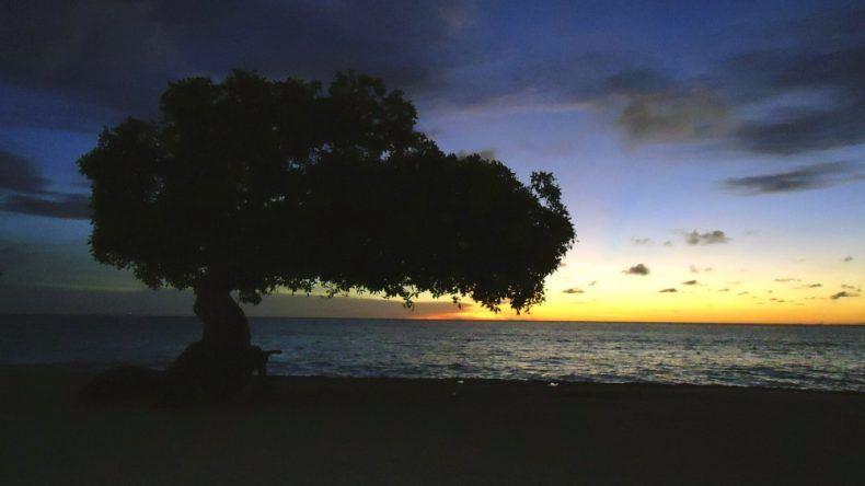 © Divi-Divi Bäume | Foto ATA