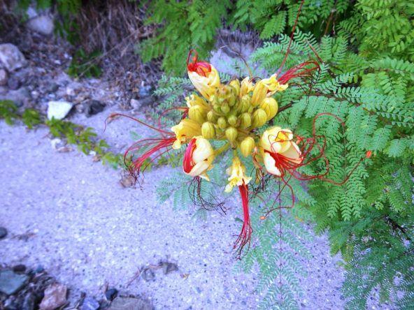 Einzigartige Blumenwelt