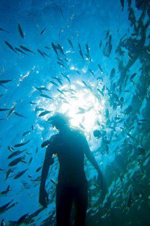 Toller Fischschwarm