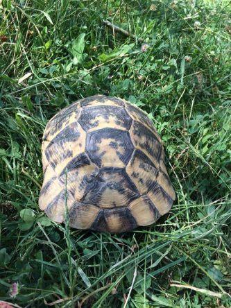 Das ist aber eine große Schildkröte