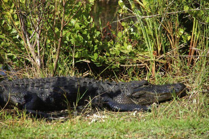 Mit Booten und Kayaks kann man die wilde Natur der Everglades erkunden.