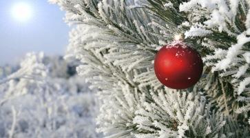 Überall werden die Weihnachtsbäume geschmückt.