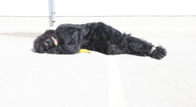 Schlafender Gorilla