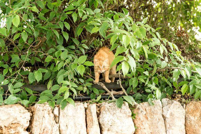 Katze im Baum Wasserrad im Viverde Sa Bassa Rotja Mallorca