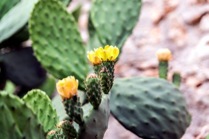 Kaktus Wasserrad im Viverde Sa Bassa Rotja Mallorca