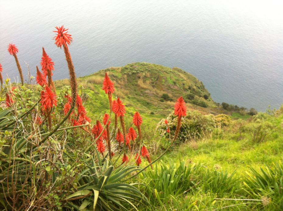 Saftiges Grün und prächtige Farben - das ist Madeira