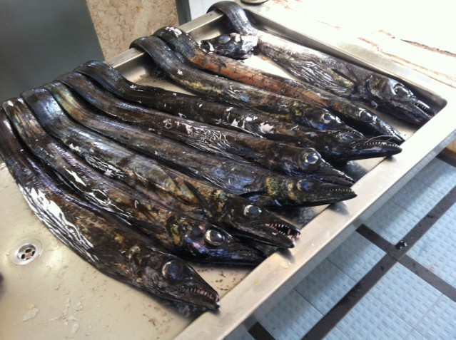 Schwarzer Degenfisch - sieht gruselig aus, ist aber sehr lecker und wird nur vor den Küsten Madeiras und in Asien gefangen.