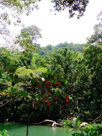 Dschungel auf Koh Tarutao