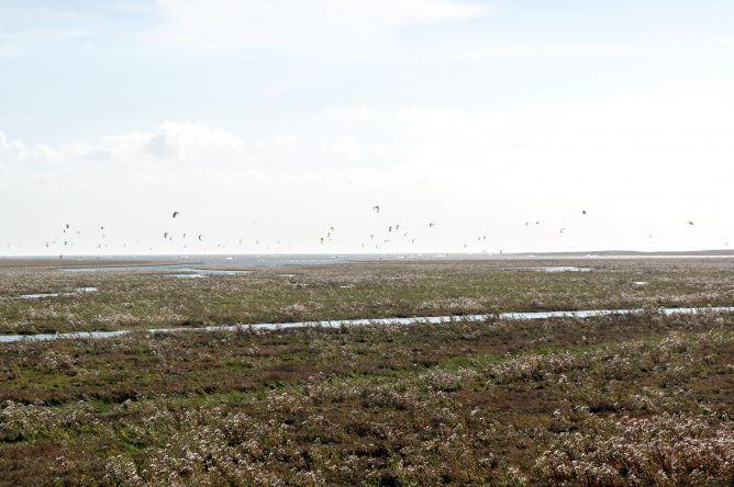 Kitesurfer St. Peter Ording