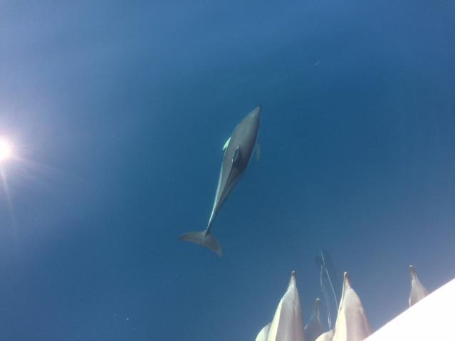 Begrüßte uns zum Tag auf dem Meer - eine kleine Gruppe Delfine.