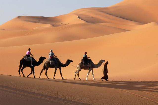 Wüste Kamele Ägypten