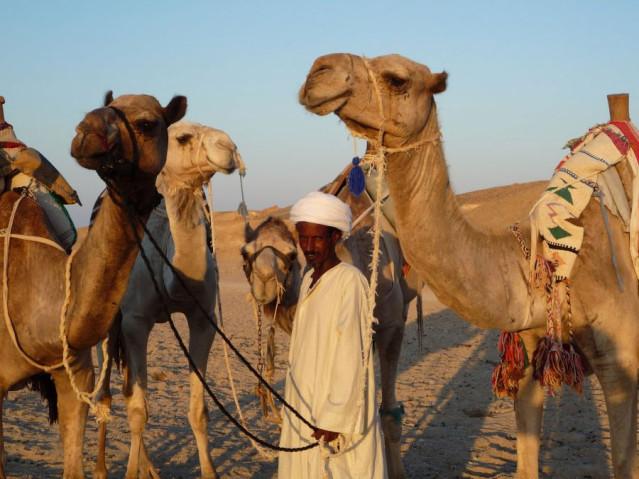 Wüste Orient Kamel