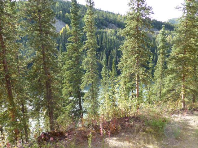 Nenana River Alaska