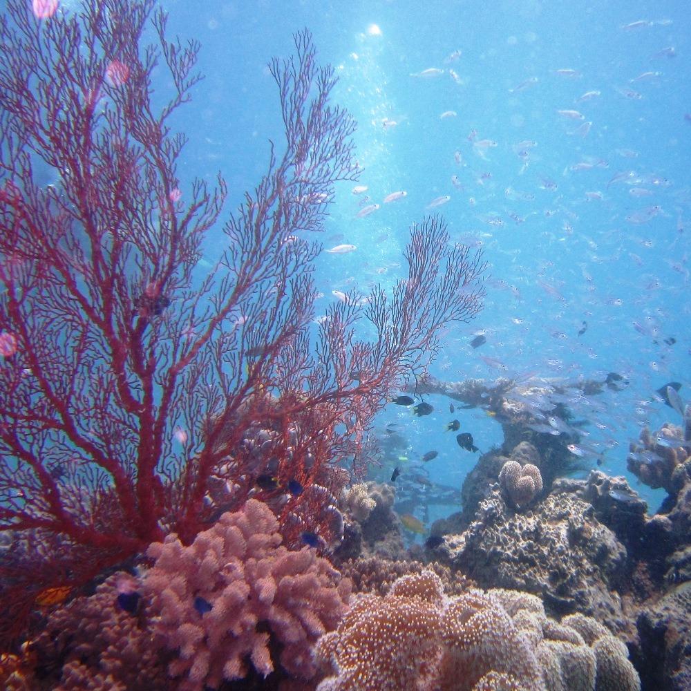 Korallen Great Barrier Reef