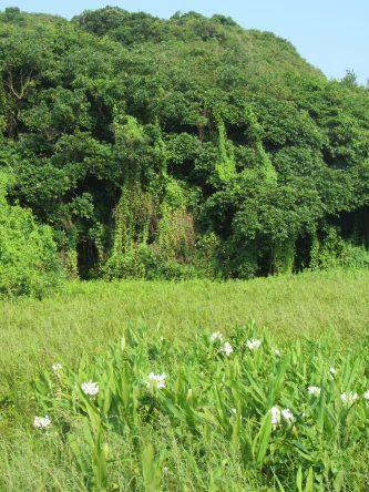 Dichte Vegetation auf der Lamma Island