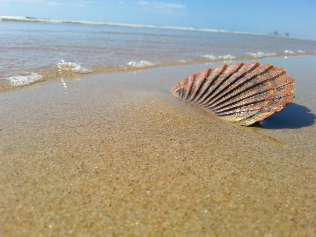 Seestern im Sand.