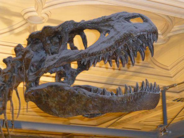 Dinosaurierskelett im Natural History Museum