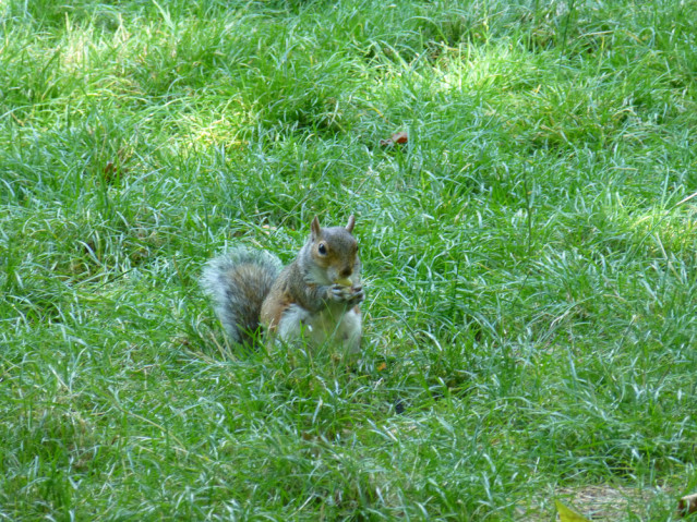 Hier wimmelt es nur so von Eichhörnchen