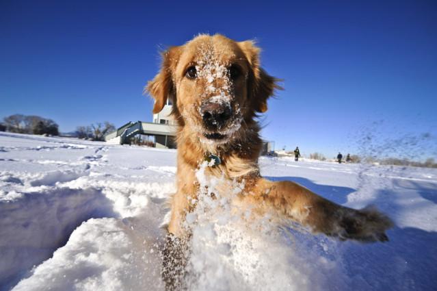 Hund tollt im Schnee