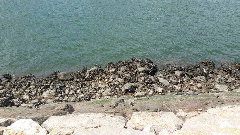 Am Hafen von Lagos werden Muschelsammler glücklich
