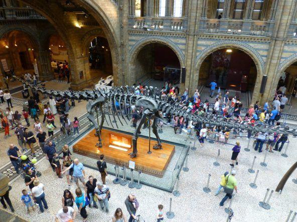 Das Foyer des Natural History Museum
