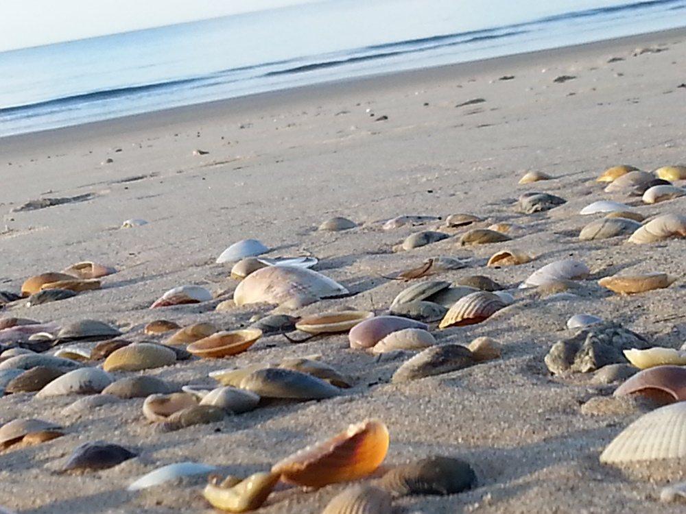 Meeresschätze so weit das Auge reicht
